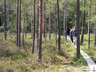 Stig med människor i en skog.