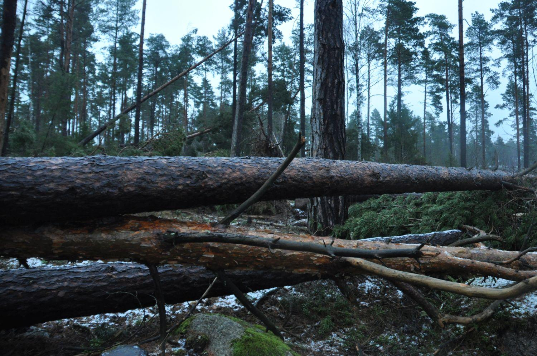 Stormen tuva slog hart mot norge