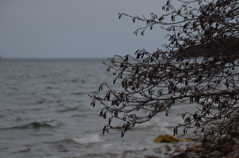 blåsigt hav