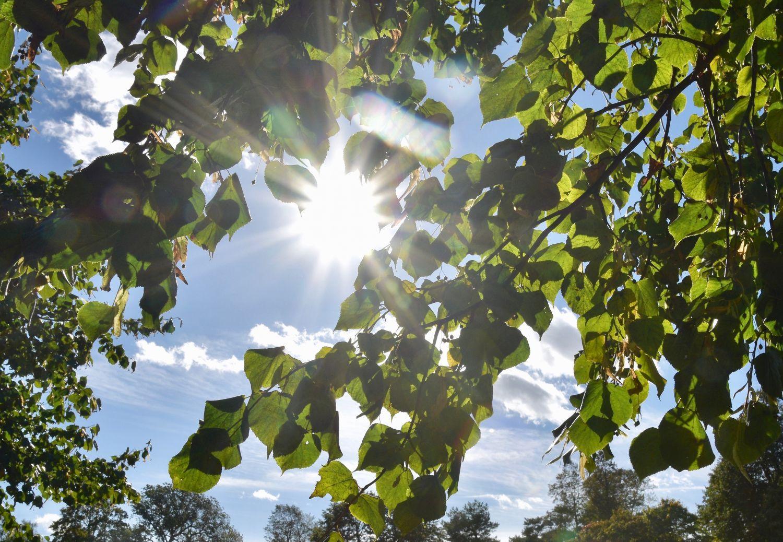 Solen skiner mellan trädgrenar