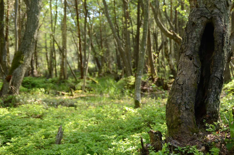 Bodö, skog, natur