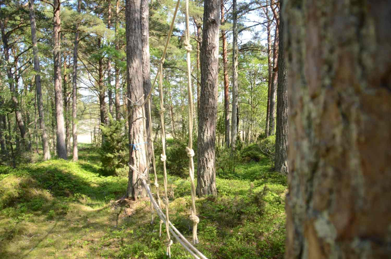 Bodö, naturstig, natur, skog, skärgård