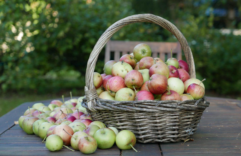 Äpplen i korg på ett bord