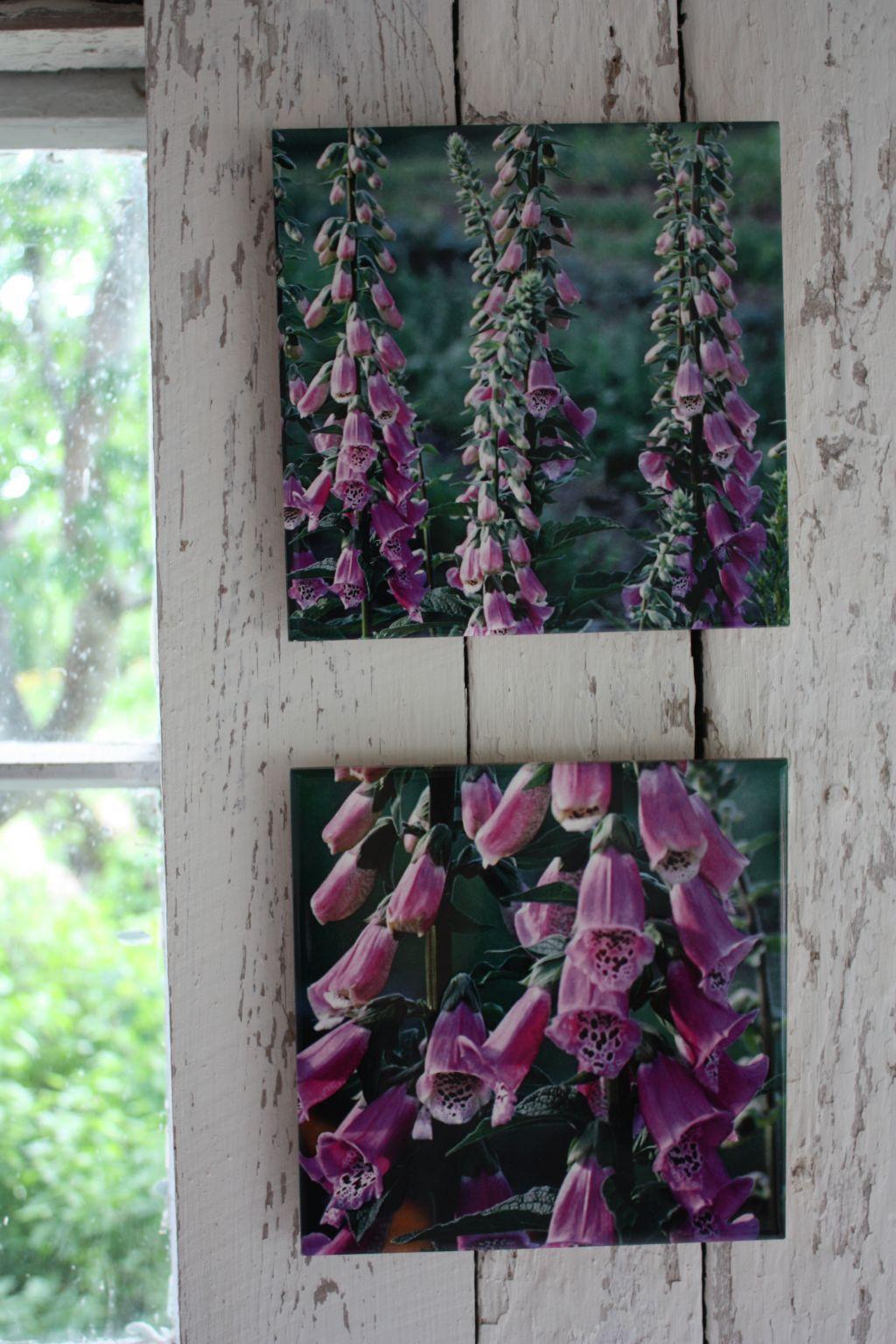 Två kakeltavlor med tryck av fotografier på fingerborgsblommor.