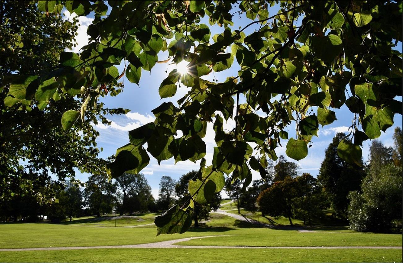 sol genom träd