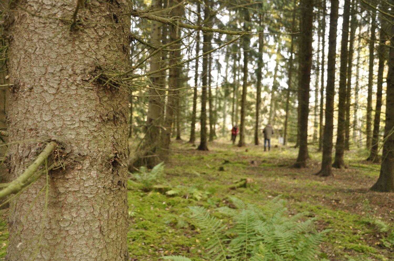 Ett träd i förgrunden. I skogsdungen bakom syns två tävlanden