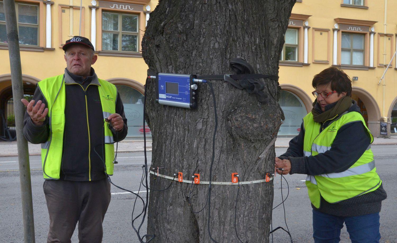 Man och kvinna undersöker träd i stadspark