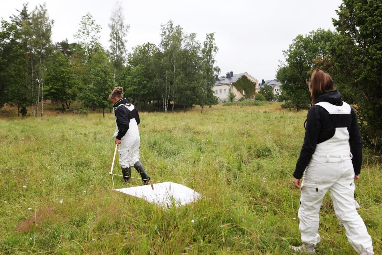 två kivnnor drar vitt lakan över gräset