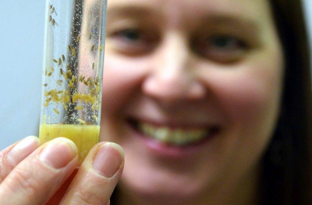 Kvinna håller upp provrör med bananflugor