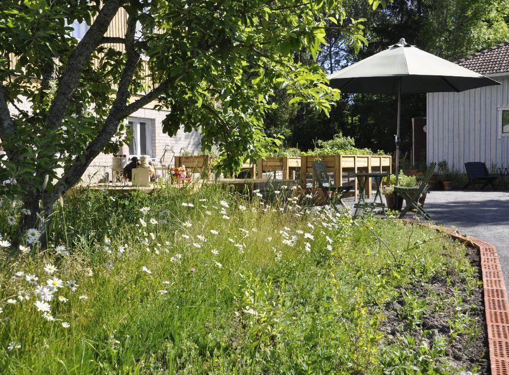 Trädgård. I förgrunden prästkragar och ett äppelträd, längre bort finns ett parasoll, sittplatser och ett hus.