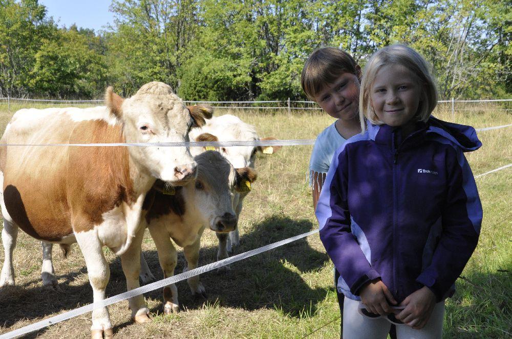 Två flickor vid en kohage. Några kor i bild.