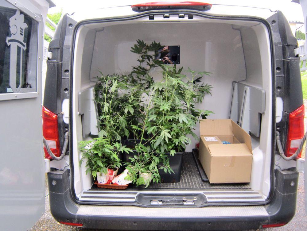 Cannabis i en bil