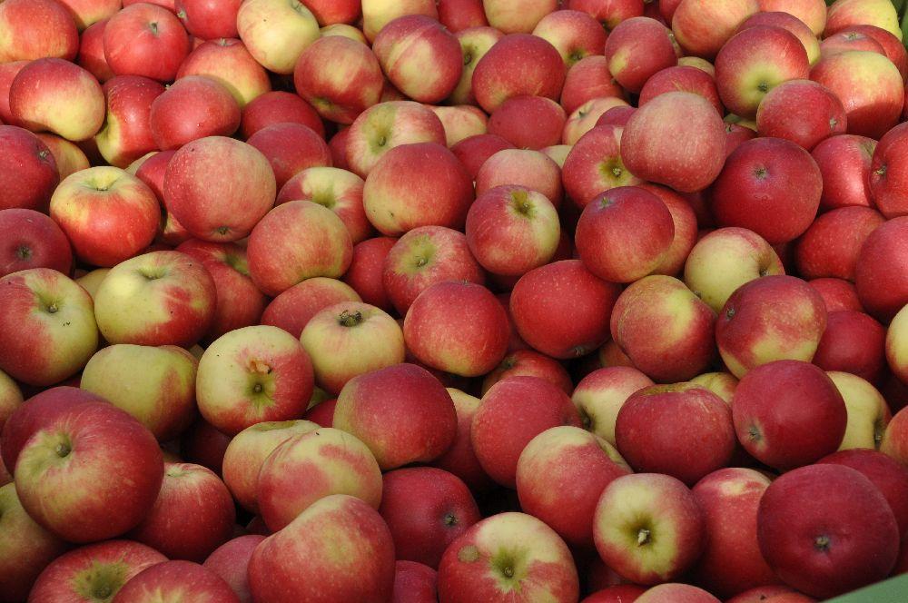 Rödgröna äpplen fyller hela bilden.