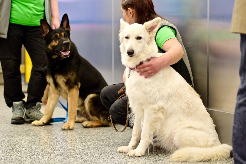 Två hundar som sitter på golvet.