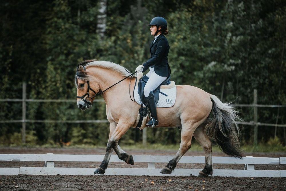 Häst och ryttare på dressyrbana.