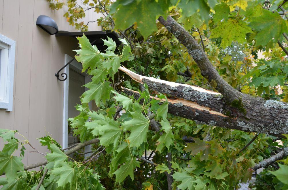 Skadorna på 1800-talshuset hade kunnat vara mycket värre – ägaren hade nyligen låtit beskära och fälla andra dåliga träd