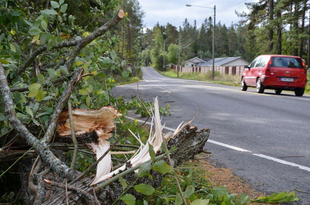 Oklart hur många träd som föll i Åbo – nya anmälningar görs hela tiden